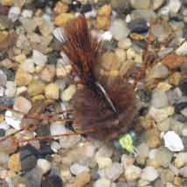 Enrico Puglisi EP Crab Brown #8wg Saltwater Fly