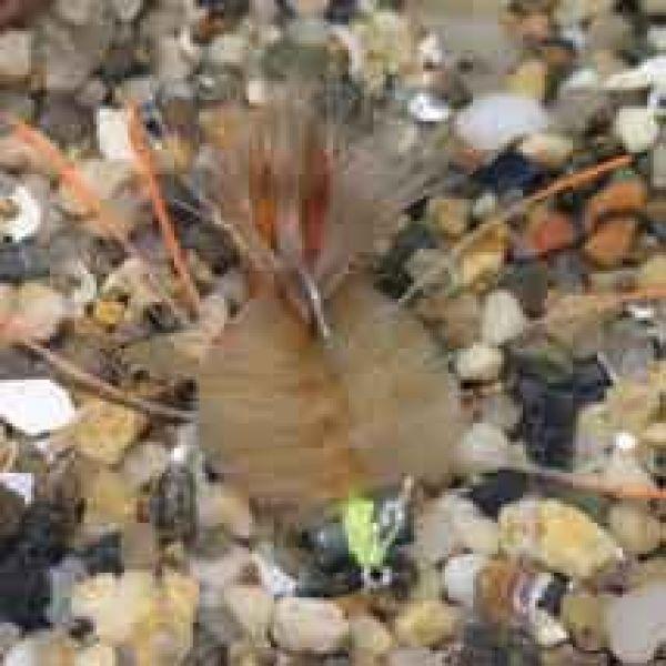 Enrico Puglisi EP Crab Saltwater Fly - Tan