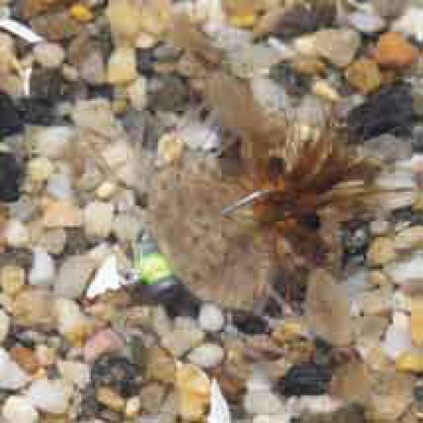 Enrico Puglisi Palometa Crab Tan Saltwater Fly