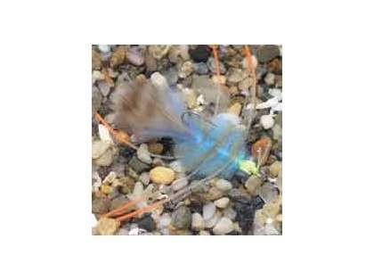 Enrico Puglisi EP Crab Blue Saltwater Fly