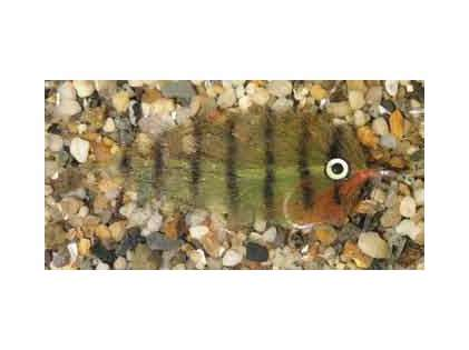 Enrico Puglisi Mangrove Baitfish Oscar Saltwater Fly