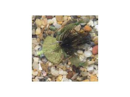 Enrico Puglisi Palometa Crab Olive Saltwater Fly